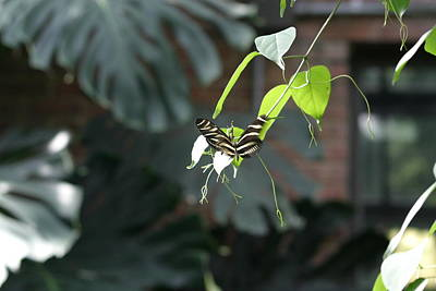 National Zoo - Butterfly - 12124 Poster by DC Photographer