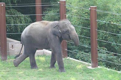 National Zoo - Elephant - 01131 Poster