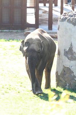 National Zoo - Elephant - 011317 Poster