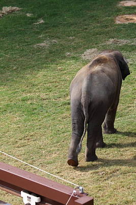 National Zoo - Elephant - 01134 Poster