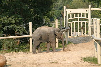 National Zoo - Elephant - 12127 Poster