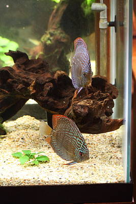 National Zoo - Fish - 011314 Poster by DC Photographer