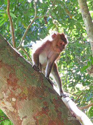 Native Palawan Monkey Poster