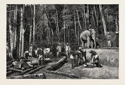 Natives Felling Timber In A Forest  Perseverance Property Poster