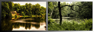 Nature Center 01 Tree Silhouette Fullersburg Woods 2 Panel Poster by Thomas Woolworth