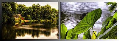 Nature Center 01 Water Leaf Fullersburg Woods 2 Panel Poster by Thomas Woolworth