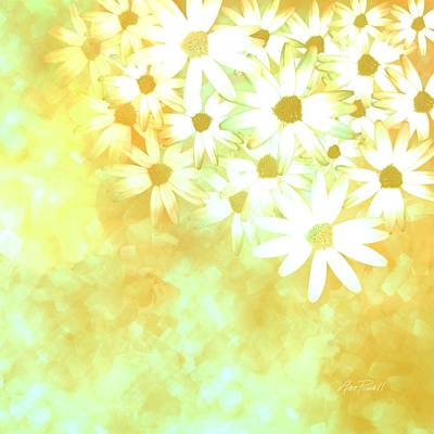 nature - flowers- White Daisies -floral art Poster
