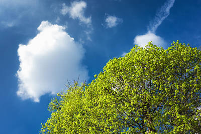 Nature In Spring - Bright Green Tree And Blue Sky Poster by Matthias Hauser