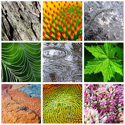 Nature Patterns And Textures Square Collage Poster