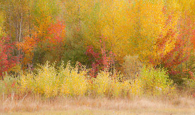 Nature's Palette Poster by Paul Miller