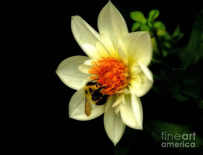 Natures Pollinator Poster by Inspired Nature Photography Fine Art Photography