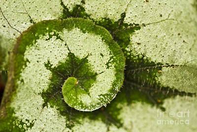 Natures Spiral Poster