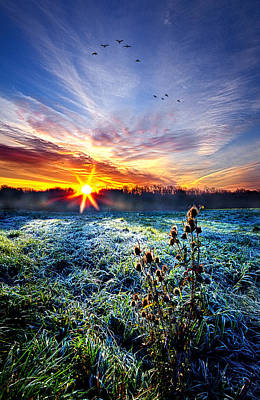 Nature's Way Poster by Phil Koch