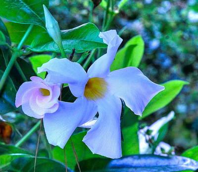 Flower 14 Poster