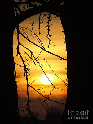 Natures Window Poster