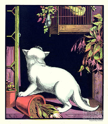Naughty Cat Eyes A Yellow Bird In Cage Poster by Pierpont Bay Archives
