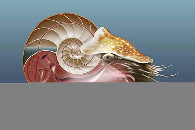 Nautilus, Artwork Poster