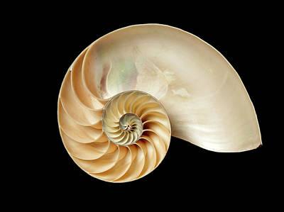 Nautilus Pompilius Poster