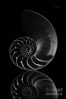 Nautilus Reflection Poster by Eyzen M Kim