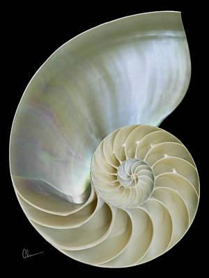 Nautilus Shell On Black Poster