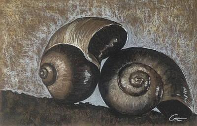 Nautilus Shells In Sepia Poster