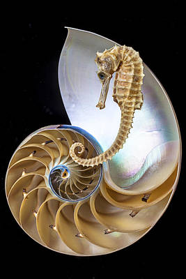 Nautilus With Seahorse Poster