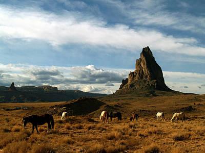 Navajo Horses At El Capitan Poster