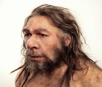 Neanderthal Model Poster by S. Entressangle/e. Daynes