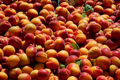 Nectarines For Sale At Weekly Market Poster by Panoramic Images