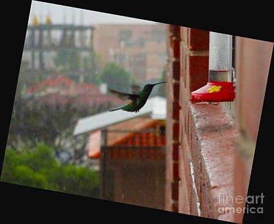 Neither Rain Nor Sleet  Poster by Al Bourassa