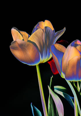 Neon Tulips Poster