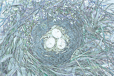 Nest Eggs By Jrr Poster by First Star Art