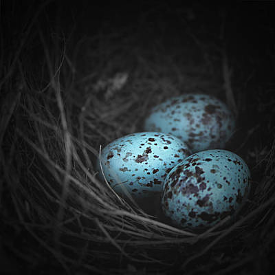 Nest Of 3  Poster by Trish Mistric