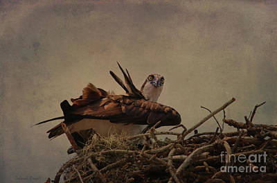 Nesting At Walmart Textured Poster by Deborah Benoit