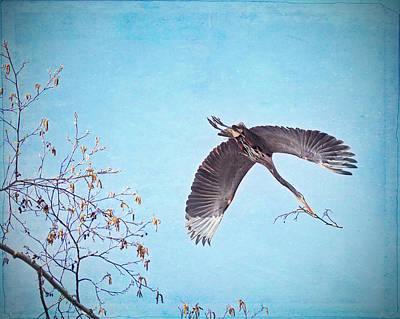 Poster featuring the photograph Nesting Heron by Peggy Collins