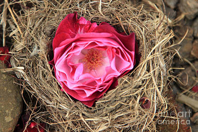 Nesting Rose Poster by Jeanette French