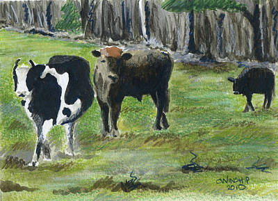 New England Cows Poster
