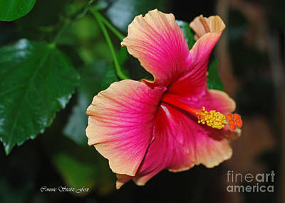 New Every Morning - Hibiscus Poster by Connie Fox