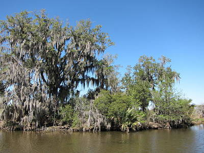 New Orleans - Swamp Boat Ride - 1212132 Poster