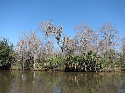 New Orleans - Swamp Boat Ride - 121242 Poster