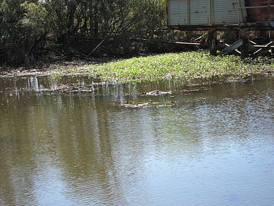 New Orleans - Swamp Boat Ride - 121274 Poster by DC Photographer