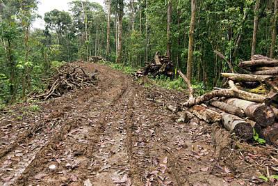 New Road Cut Through Tropical Rainforest Poster
