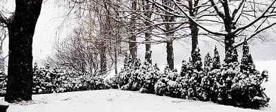New Snow - Evergreens Poster