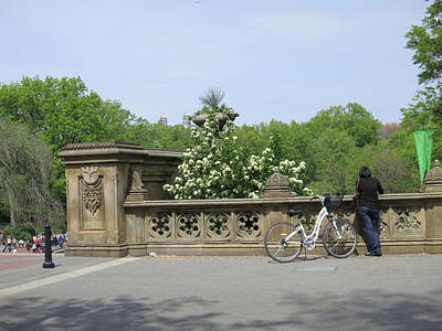 New York City - Central Park - 121210 Poster