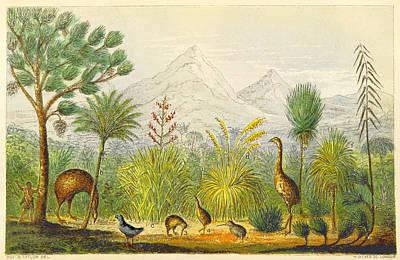 New Zealand Kiwi, Takahe, Extinct Moa Poster by British Library