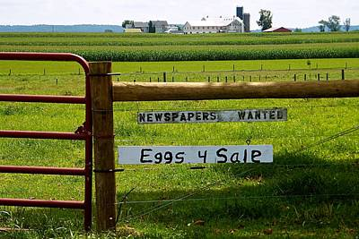 Newspapers Wanted Eggs 4 Sale Poster