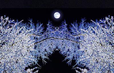 Night Blooms Poster