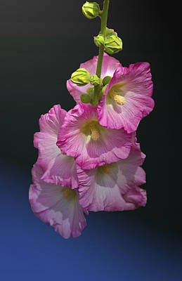 Night Flower Poster