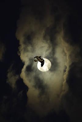 Night Hawk Poster