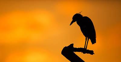Night Heron Silhouette Poster